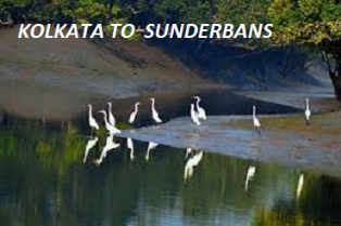 Kolkata to Sunderban Car Rental